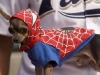 dog-spiderman