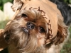 ewok-dog-costume