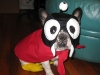 nibbler-futurama-dog-costume